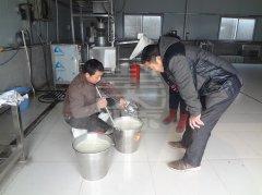 彭大顺豆腐培训中的点浆